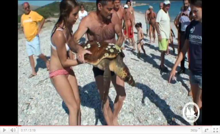 Διάσωση χελώνας Caretta caretta στη Σάμο από το Αρχιπέλαγος