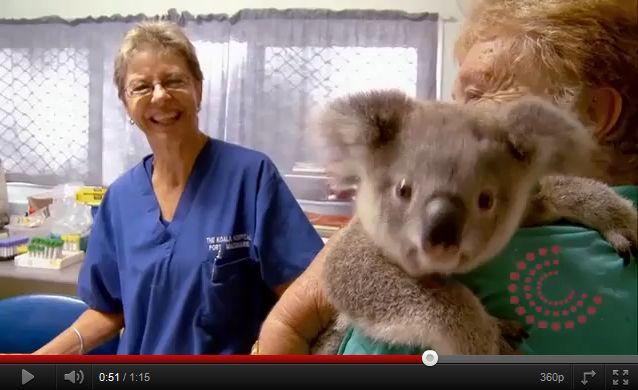 Τα κοάλα εξαφανίζονται από την Αυστραλία